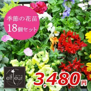 店長おまかせ 季節の花苗18個セット ガーデニング 園芸 寄せ植え 花 苗|elfleur