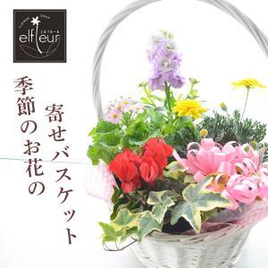 店長おまかせ 季節の寄せバスケットアレンジメント プレゼント ギフト ガーデニング 引越し祝い 寄植え 鉢花 誕生日 引越し祝い|elfleur