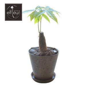 観葉植物 4号鉢 パキラ アートストーン植 受皿付 elfleur