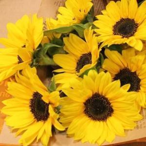 ひまわり20本 花束 生花 フラワーギフト プレゼント ヒマワリ 向日葵 誕生日|elfleur