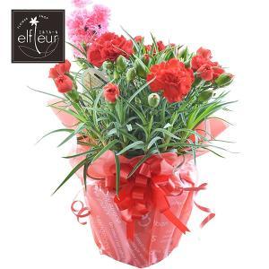 母の日 ギフト プードルピック付 カーネーション5号鉢 カラー:レッド  花鉢 プレゼント 贈り物 2021 elfleur