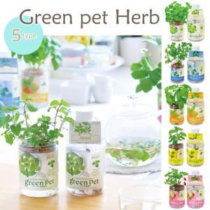 green pet Herb 育てるグリーンペットハーブ 全5種■ミント/イタリアンパセリ/バジル/レモンバーム/ワイルドストロベリー GD444【 栽培キット】|emiook