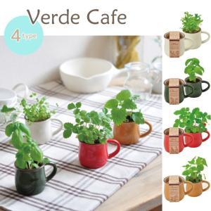 Verde Cafe ヴェルデカフェ 全4種■ミント/バジル/レモンバーム/ワイルドストロベリー GD549【栽培キット】|emiook