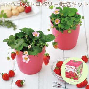 ピンクの花咲くストロベリー栽培キット GD796【栽培キット】|emiook