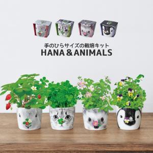 HANA ANIMALS ハナアニマルズ 全4種 ワイルドストリベリー/クローバー/ミニバラ/ビオラ GD858  栽培キット|emiook