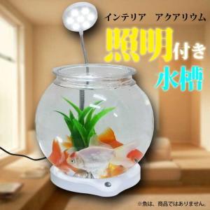 【送料無料】水槽 照明付きミニ水槽 鉢 テラリウム テラリウム 水槽 インテリア ボトルアクア 熱帯魚|emuwaifarm