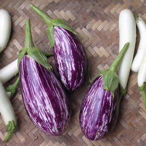 紫色と白色の縞模様が美しい、クリーミーで美味しい南フランス原産のナスです。 草丈35cmと低く、実は...