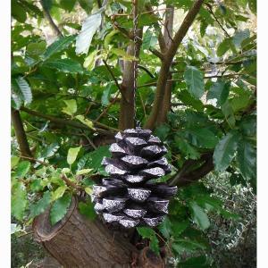 Fallen Fruits:バードフィーダー パインコーン(FB176) engei