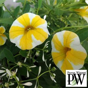 草花の苗/スーパーベル:レモンスライス&ダイアモンドフロスト2種植え4号ポット|engei