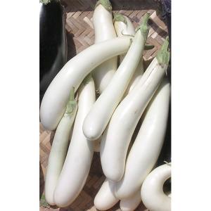 長さ5〜10cmの小型で細長い真っ白な茄子です。 アクもタネも少なく、過熱するととろけるような味わい...