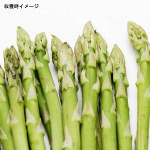 野菜の苗/アスパラガス:グリーン1年生苗3号ポット 4株セット|engei