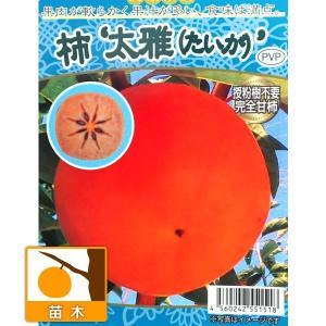 果樹の苗/カキ(柿):たいが(太雅)4号ポット