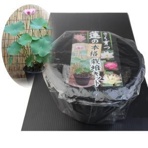 鉢付き小型蓮栽培キット|engei