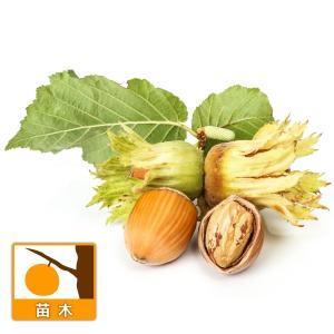 ヘーゼルナッツはカバノキ科の落葉低木。和名は西洋ハシバミです。お菓子にもよく使われ、栄養素が高いとい...