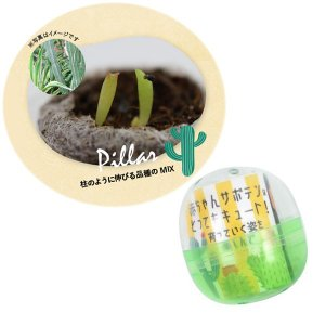ギフトに サボテン栽培カプセル:柱サボテンミックス 1個 ガチャカプセルに、膨らむ土とサボテンのタネ入り|engei