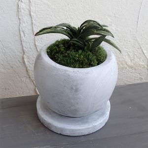 観葉植物/ギフトに 万年青 (おもと):瑞泉マルモボウル白(直径10cm)受け皿付き|engei