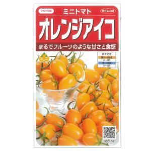 トマト:ミニトマト オレンジアイコ サカタ 野菜タネ