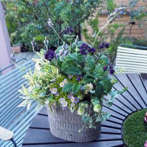 送料無料 季節の寄せ植えアレンジ・ブリキ鉢:ブルー系|engei
