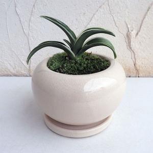 観葉植物/ギフトに 万年青 (おもと):お多福陶器鉢植え/デュラン白S・皿付|engei