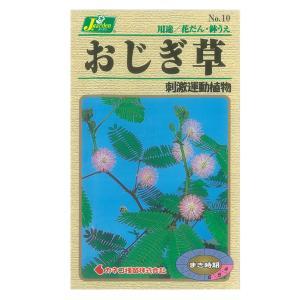 おじぎ草(オジギソウ) カネコ 花タネ|engei