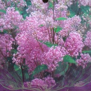 カリフォルニアライラックという名前で人気の低木です。小さな花が集まって、5cmくらいの花穂を形成し、...