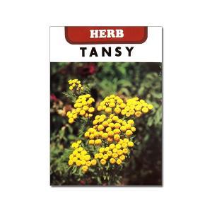 キク科の耐寒性多年草。ヨモギギクとも呼ばれます。開花直前にドライフラワーにするといつまでも色褪せない...