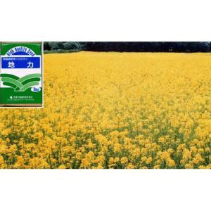 タネ・約400平米分・暖地10〜11月まき・寒地4〜8月まき 景観緑肥用シロカラシ地力 1kg