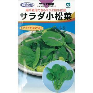 コマツナ:サラダ小松菜 周年まき サラダにおすすめ 野菜タネ *