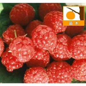 果樹の苗/木いちご(キイチゴ):ラズベリー レッドジュエル3.5号ポット|engei