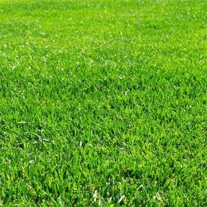 芝の種:トールフェスク インフェルノ1kg|engei