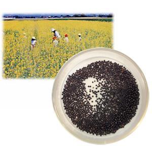 タネ 景観作物:菜の花500g入り