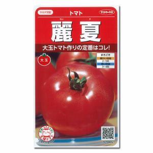 株で熟して収穫出来る!果肉が丈夫な赤熟トマト。 ※詳しい商品説明は下のほうに記載があります