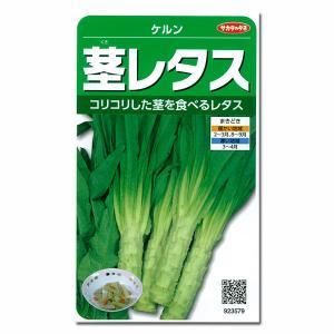 有効期限19年10月 茎レタス:ケルン* サカタ 野菜タネ|engei