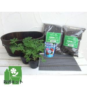 ハーブの苗/蚊よけ植物・蚊連草(かれんそう)栽培セット(鉢・土・肥料付き)焼き杉プランター