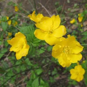 本格的な春の訪れを感じさせてくれる花木。日本各地の山野に自生していて、暑さ寒さに強くたいへん丈夫な花...