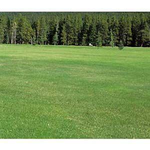 芝の種:ケンタッキーブルーグラス サドンインパクト1kg|engei