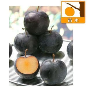 果樹の苗/スモモ(プラム):バイオチェリー3.5〜4.5号ポ...