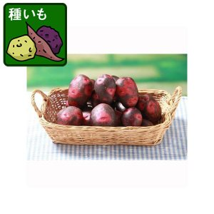 野菜の苗/ジャガイモ:デストロイヤー500g...