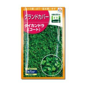 ダイカンドラ1平米分(20ml) タネ