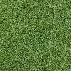 芝の種:ケンタッキーブルーグラスブルーノート1kg 暑さに強く日陰にも向く タネ 40平米分|engei