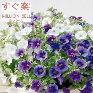 草花の苗/カリブラコア:すぐ楽ミリオンベルブルーベリー&バニラ3.5号ポット (R)|engei