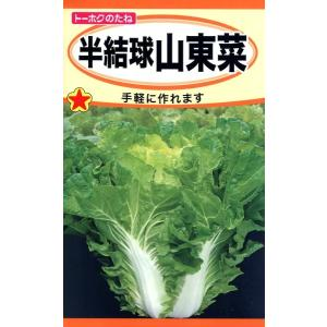半結球山東菜 種子 たね 品番5052