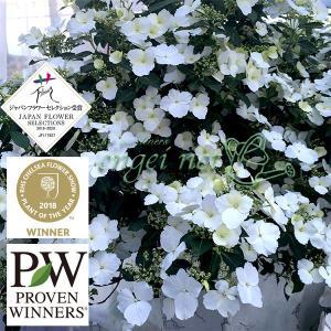 アジサイの最新品種を2020年春にお届けいたします!ブライダルシャワーは、マクロフィラと日本の原種を...