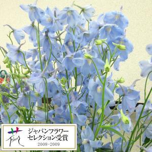 草花の苗/19年3月中旬予約 デルフィニウム:アクティア3.5号ポット