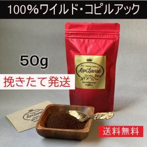【50g】100%ワイルド コピルアック  野生ジャコウネコ コピルアク ジャコウネココーヒー|enrico