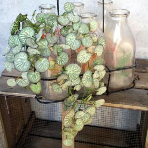 いなざうるす屋 フェイクグリーン ユキノシタ 壁飾り 壁掛けインテリア 観葉植物 ウォールデコレーション 緑 壁掛け インテリア|enteron-kagu-shop