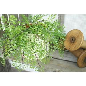 いなざうるす屋 フェイクグリーン アジアンタム 壁飾り 壁掛けインテリア 観葉植物 ウォールデコレーション 緑 壁掛け インテリア イミテーショングリーン|enteron-kagu-shop