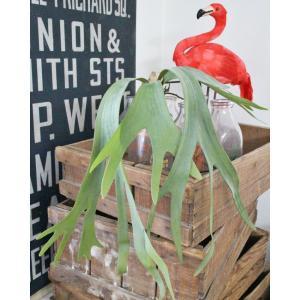 いなざうるす屋 フェイクグリーン コウモリランS 壁飾り 壁掛けインテリア 観葉植物 ウォールデコレーション 緑 壁掛け インテリア|enteron-kagu-shop