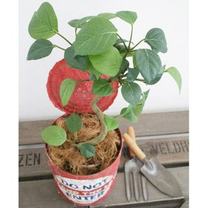 いなざうるす屋 フェイクグリーン ベンジャミン 壁飾り 壁掛けインテリア 観葉植物 ウォールデコレーション 緑 壁掛け インテリア|enteron-kagu-shop