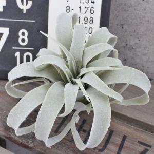 フェイクグリーン くるりんティランジア シルバーグリーン 観葉植物 フェイク グリーン インテリア 雑貨 お洒落 可愛い いなざうるす屋|enteron-kagu-shop
